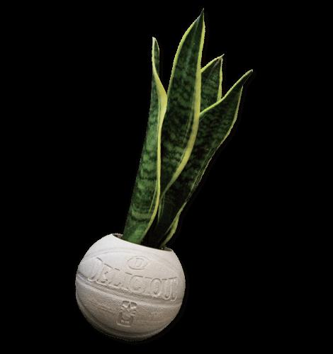 BODEGA ROSE for Delicious Baseket Ball Planter
